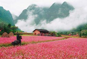 Tour Du Lịch Hà Giang 3 Ngày 2 đêm Xe Chất Lượng Cao
