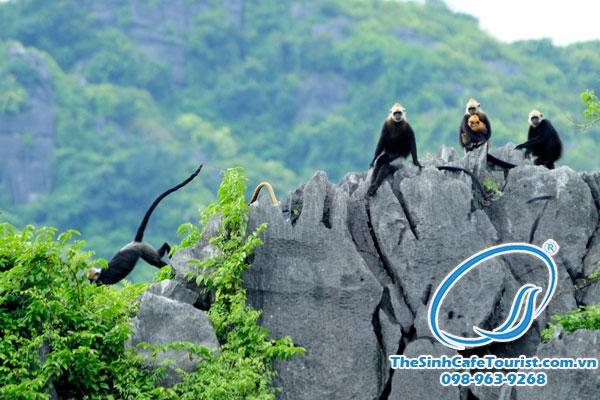 đảo khỉ hòn đảo với những lào linh trưởng quý hiếm