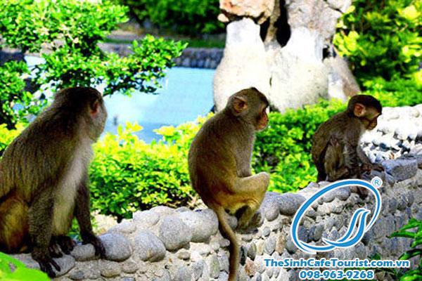 Tour du lịch Cát Bà đảo khỉ