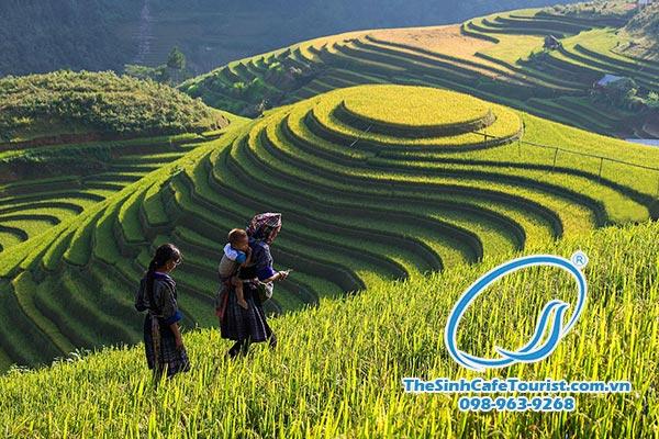 Tour du lịch SaPa 2 ngày 3 đêm Cát Cát Lao Chải Tả Van