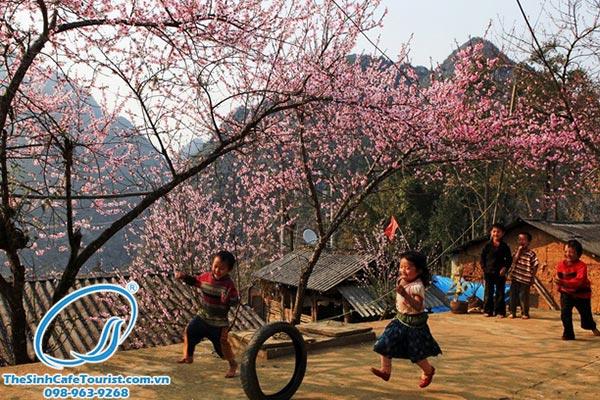 Tour du lịch Sapa tháng 2 giá rẻ - mùa của những loài hoa rực rỡ