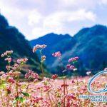Tour Lịch Hà Giang 3 Ngày 2 Đêm
