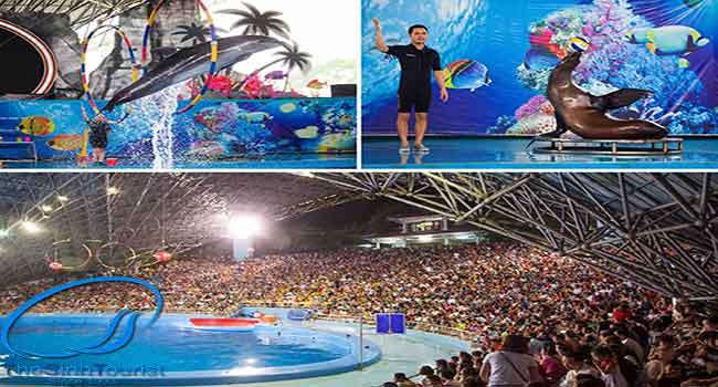 Chương trình biểu diễn cá heo ởKhu du lịch giải trí Quốc tế Tuần Châu