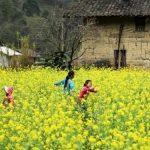 Mua Hoa Cai Ha Giang The Sinh Ca Fe Tourist